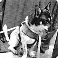 Adopt A Pet :: Nanook - Spokane, WA