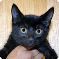 Adopt A Pet :: Chip - Wildomar, CA