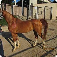 Adopt A Pet :: #13 MONTY - Norco, CA