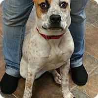 Adopt A Pet :: Molly - Lisbon, OH