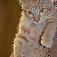 Adopt A Pet :: Alfred - Albemarle, NC