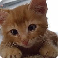 Adopt A Pet :: Garfield - Irwin, PA