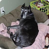 Great Dane Dog for adoption in Phoenixville, Pennsylvania - Winnie