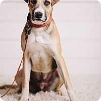 Adopt A Pet :: Baker - Portland, OR