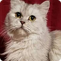 Adopt A Pet :: Silver - Ennis, TX