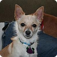 Adopt A Pet :: Roxy - Commerce City, CO