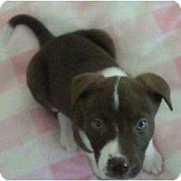 Adopt A Pet :: Ty - Phoenix, AZ