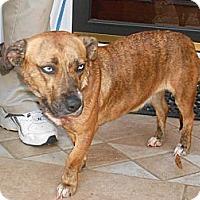 Adopt A Pet :: Betsey - Raleigh, NC