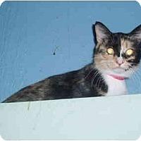 Adopt A Pet :: Valentina - Hamburg, NY