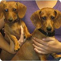 Adopt A Pet :: Winnie & Rocky-adoption pendin - San Jose, CA