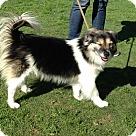 Adopt A Pet :: Olivia