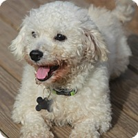 Adopt A Pet :: Mr. Bojangles-adoption pending - Norwalk, CT
