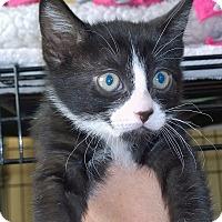 Adopt A Pet :: Merlin - Island Park, NY