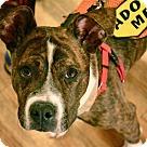 Adopt A Pet :: Fiona Fullerton