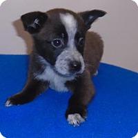 Adopt A Pet :: Bob - Gary, IN