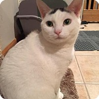 Adopt A Pet :: Jasmine - affectionate + - East Hanover, NJ