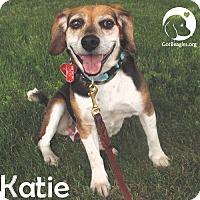 Adopt A Pet :: Katie - Novi, MI