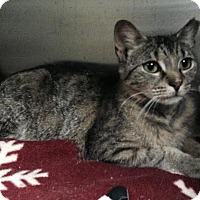 Adopt A Pet :: Paula Abdul - Richboro, PA