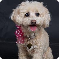 Adopt A Pet :: Tawny - Nuevo, CA