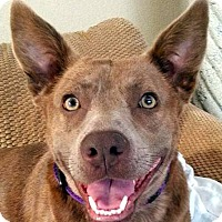 Adopt A Pet :: Ruby - Oakley, CA