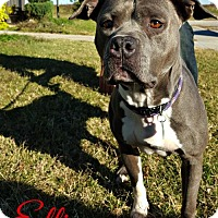 Adopt A Pet :: Courtesy Listing Ellie - Cushing, OK