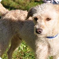 Adopt A Pet :: Baron - Tumwater, WA