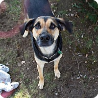 Adopt A Pet :: Kate - Westwood, NJ