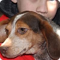 Adopt A Pet :: Jimminy - Harmony, Glocester, RI