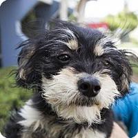 Adopt A Pet :: Gilda - San Diego, CA