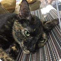 Adopt A Pet :: Mrs. Howell - Medina, OH