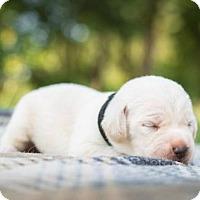 Adopt A Pet :: Tyson - Hewitt, NJ