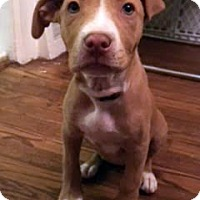 Adopt A Pet :: Laverne-Adopted! - Detroit, MI