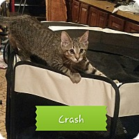 Adopt A Pet :: Crash - Colmar, PA