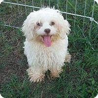 Adopt A Pet :: Benny Special boy - Manchester, NH