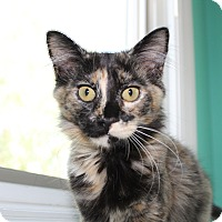 Calico Cat for adoption in Orange, California - Honey