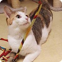 Adopt A Pet :: Rosalie - Breinigsville, PA