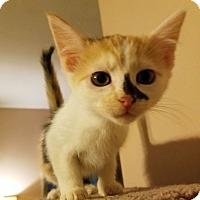 Adopt A Pet :: Lisa - Knoxville, TN