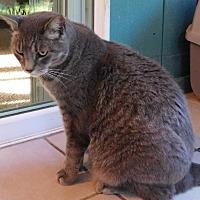 Adopt A Pet :: BUDDY - Makawao, HI