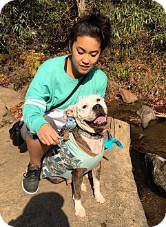 Boxer/Pit Bull Terrier Mix Dog for adoption in Atlanta, Georgia - Birdy