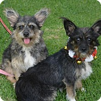 Adopt A Pet :: CHARLOTTE & COLA - video to view - Marina Del Ray, CA