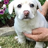 Adopt A Pet :: Jasmine - Haggerstown, MD