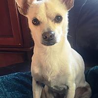 Adopt A Pet :: Sunny - Dover, MA