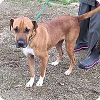 Adopt A Pet :: Dexter - pending - Manchester, NH
