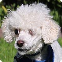 Adopt A Pet :: Dodger - La Costa, CA