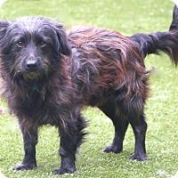 Adopt A Pet :: Harvey - Woonsocket, RI