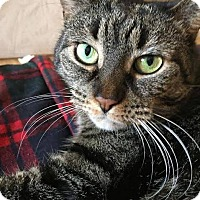 Adopt A Pet :: Chickpea - THORNHILL, ON