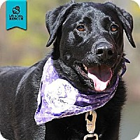 Adopt A Pet :: Abbie - Temple, GA