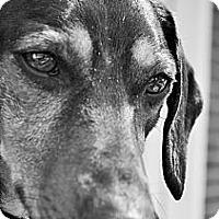 Adopt A Pet :: Keno - Decatur, GA