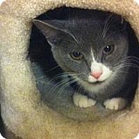 Adopt A Pet :: Rocky - Pittstown, NJ