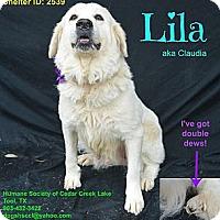 Adopt A Pet :: Lila (aka Claudia) - Plano, TX